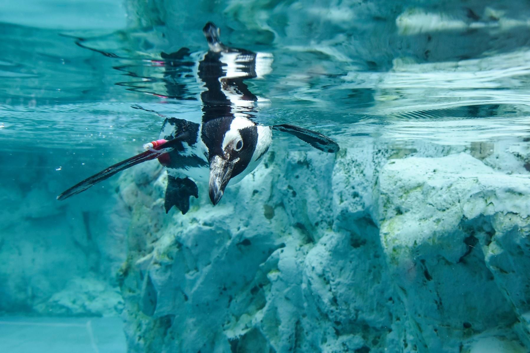Mystic Marine life Aquarium